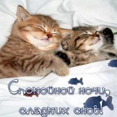 Котики Сладких снов любимый мой, открытки