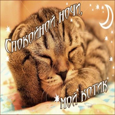 Спокойной ночи мой котик! Картинки и открытки...