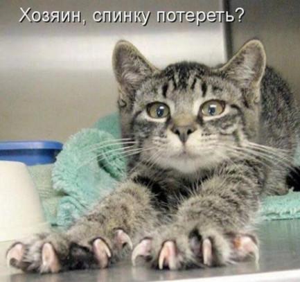 Хозяин - Приколы про котов