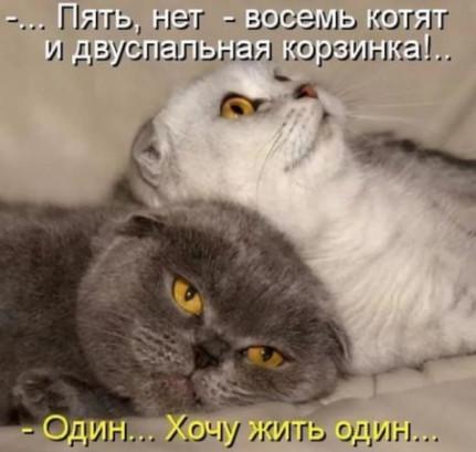 Мечты котов и кошек