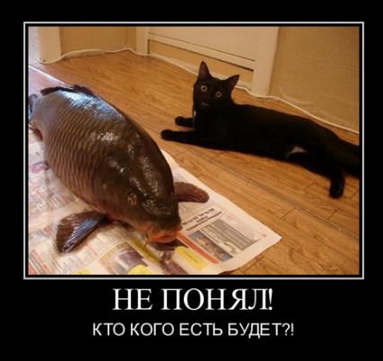 Кто кого есть будет? Кот и Карп