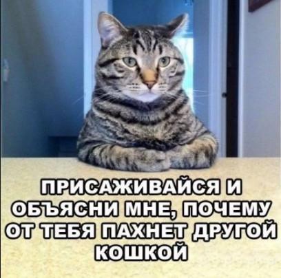 Другая кошка, разговор с котом