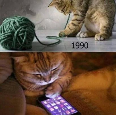 Прошлое и будущее котов