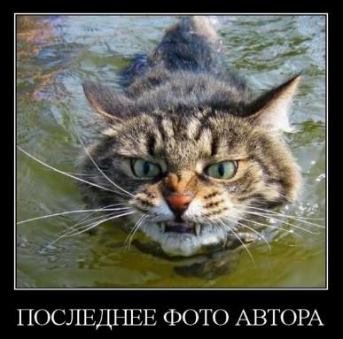 Злой кот плывёт по реке