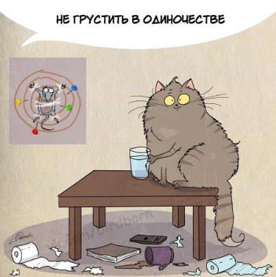 Котик не грусти