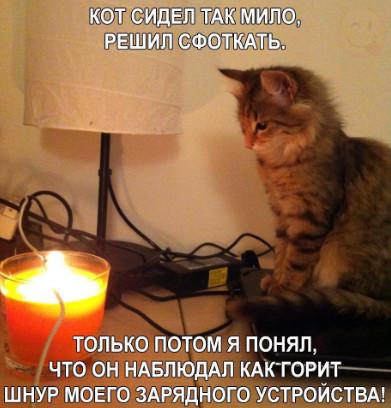 Милый котик смотрит на огонь
