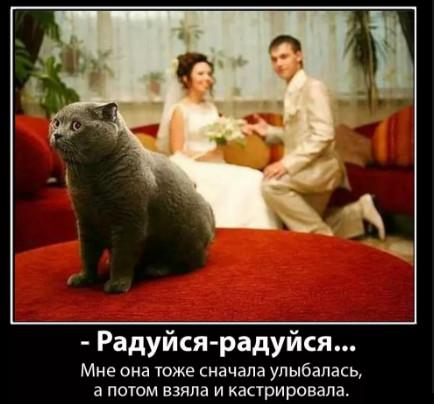 Кот рассказывает о кастрации - приколы про животных