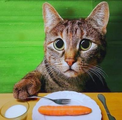 Голодный кот, приколы про кошек и собак