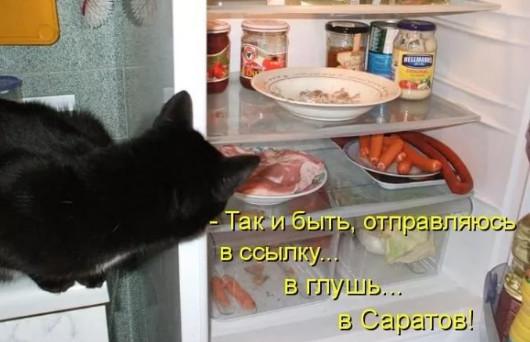 Кот и холодильник - приколы и юмор
