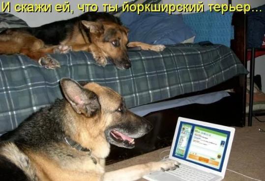 Прикол - собаки знакомятся в интернете