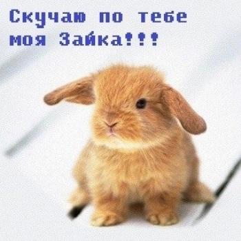 Мой заяц - ты такой