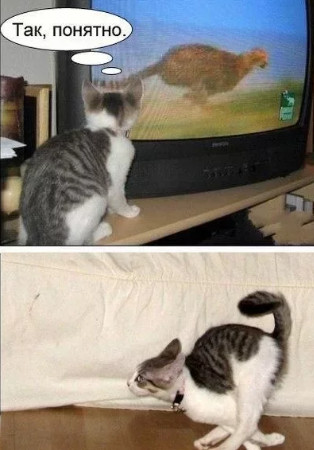 До слёз - разгон у кошки
