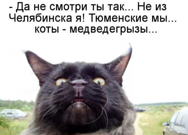 До слёз - котики бывают разные