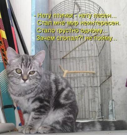 До слёз - птичка и кот