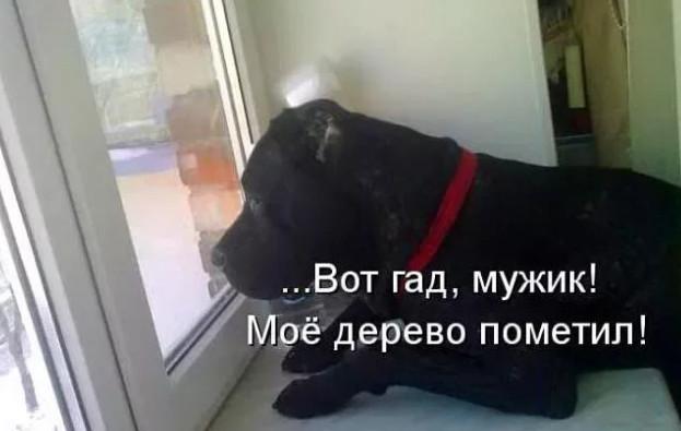 До слёз собака