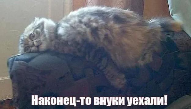 До слёз котейка