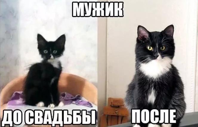 До слёз котик