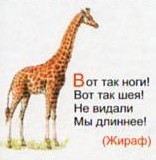Загадка про жираф