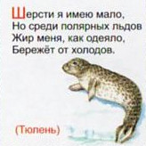 Загадка про тюлень