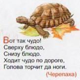 Загадка про черепаху