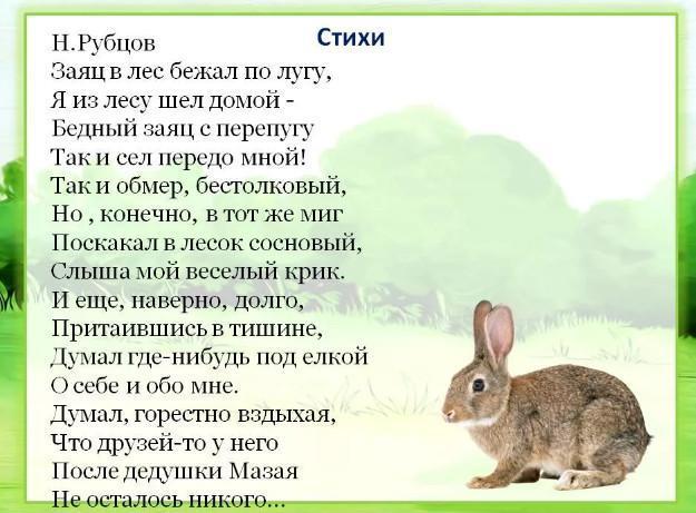 Н. Рубцов стихи про зайца