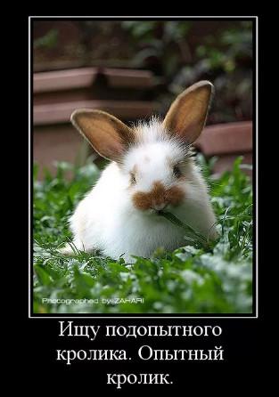 Опытный кролик