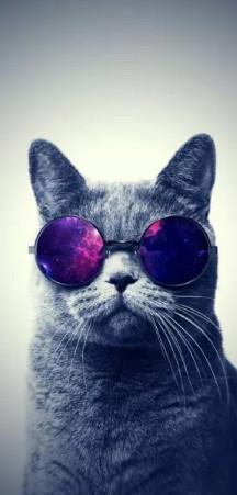 Кот в очках очень крут ава