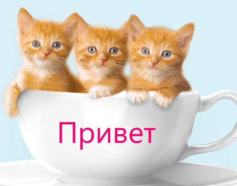 Как сказать привет, варианты, фото с котиками